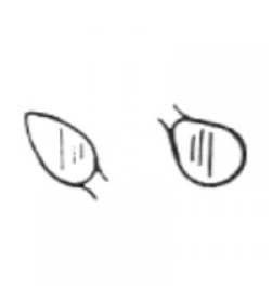 Cleoid Discoid #3 Amalgam Carver